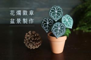 花燭徽章小盆景DIY