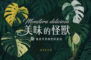 龜背芋種植指南-Monstera-deliciosa-モンステラ