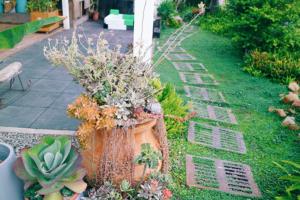 彰化田尾景點-綠果庭院-滿滿多肉植物控必訪-鄉村風
