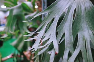 台北食蟲植物與鹿角蕨交流會
