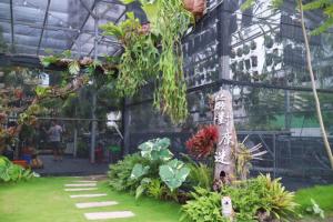 【台南】蕨對鹿迷-溫室-鹿角蕨-蕨類-空鳳-觀葉植物
