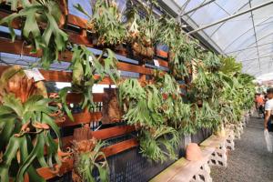 【彰化】第二屆-雨林蕨饗-鹿角蕨-雨林植物-展售會